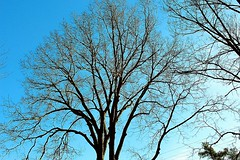A Poem (Haytham M.) Tags: elegance street twigs nature poem poetry blue clear sky branches tree