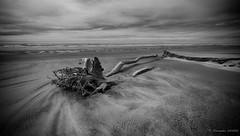 Les sables du temps (Alexandre DAGAN) Tags: farewellspit nelson newzealand beach plage nouvellezélande noir blanc black white noiretblanc noirblanc blacknwhite blackandwhite blackwhite seascape seashore ocean travel voyage