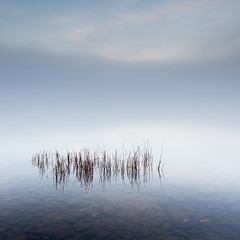 Milarrochy Reed (Willem Eelsing) Tags: reed milarrochy scotland uk longexposure