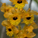 Orkidé/Orchid
