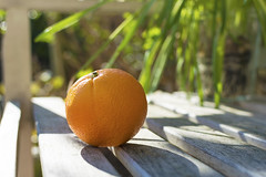 Orange?! (Jeffrey Camphens) Tags: orange green sunny bright shadow color colors colorful happy fruit vegetables ihavenoidea