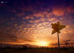 Daffodil sunset... (Kerriemeister) Tags: cloud clouds cloudscape sky daffodil silhouette sunset york fulford trees nikon flower