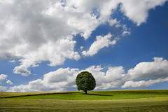 """The Tree - June 2013"" (helmet13) Tags: summer sky tree nature clouds landscape raw sommer meadow wiese silence simplicity chestnut landschaft singletree gettyimages aoi kastanie ruhe 200faves peaceaward d700 world100f"