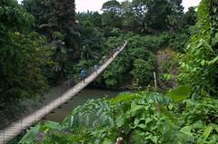 Hanging bridge Tangkahan