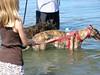 GreyhoundPlanetDaySept132009026