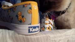 Untitled (2013-09-06 14:42:22) (Forever Gracie) Tags: fashion shoes sneakers kicks keds selfies