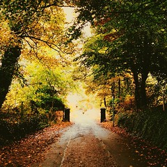 Autumn is here! (The_Vintage_Modernist) Tags: autumn trees nature leaves square jj warm colours explore squareformat photooftheday natgeo nationalgeograp