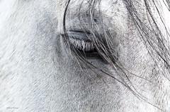 DSC_4101 (obersonrobert) Tags: portrait horse animal blackwhite 1755 nikond7000