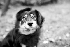 No, no... (I.Dostál) Tags: portrait bw dog white black blackwhite move bn cb puntas blackandwhiteonly