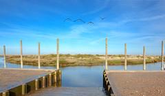 Flight over The Jetty (mayaplus) Tags: blue haven water geese flight jettynorfolk