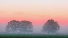 Misty Dream (jactoll) Tags: trees light mist misty fog sunrise landscape dawn nikon mood colours foggy worcestershire hanbury d7000 jactoll