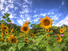 (Polotaro) Tags: flower nature pen olympus   zuiko hdr  11        epm2