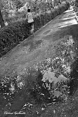 (Eleanna Kounoupa) Tags: street trees blackandwhite reflections shadows greece crete publicgarden rethymnon    blackwhitephotos     stphotographia