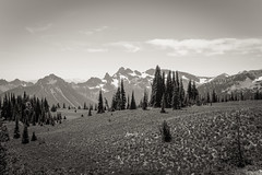 Alpine trees (Ben.d.s) Tags: seattle trip travel blue camping trees summer camp sky blackandwhite bw white mountain snow black west nature pine digital washington fuji mt pacific northwest hiking north hike trail rainier cascades pacificnorthwest wa mtrainier cascade pnw vignette pinetrees seattlewa x100 seattlewashington fujix100s x100s
