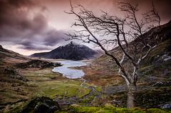 Llyn Idwal Lake (Marc Clack) Tags: morning lake tree wales early 2014 ogwen tamaron 1024mm