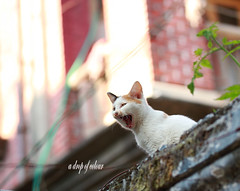 Today's cat 2014.1.16 (ladious666) Tags: life animal cat alive catsplanet