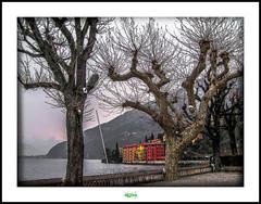 BELLANO - LAGO DI COMO (régisa) Tags: lake como tree arbol lago lac boom arbre baum italie côme bellano iatlia mygearandme flickrstruereflection1