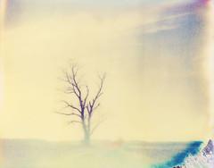 (sol exposure) Tags: polaroid missouri pro spectra expired waldron oldgeneration vision:mountain=0614 vision:sunset=0697 vision:clouds=0741 vision:outdoor=0546 vision:plant=0545 vision:sky=0797