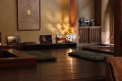 IMG_1164 (JeromePen) Tags: jardin nara japon japonais daim bouddhisme