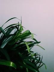 green (r u b a n) Tags: flowers plant green art modern contemporary cam vsco flickrandroidapp:filter=none