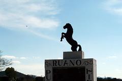 Ruano (marthahari) Tags: airelibre crta caminorealdetierraadentro