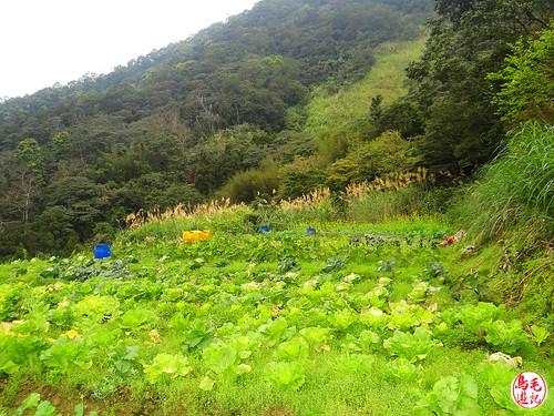 小格頭獅頭山‧鱷魚島景觀 (42).jpg