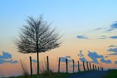 21.02.2014 (Torsten Reuschling) Tags: sunset tree fence way dawn abend sonnenuntergang dmmerung zaun dsseldorf baum abendhimmel stake weg pfosten silhuettes gerresheim schwarzbach abendrte mygearandme mygearandmepremium sonyslta57