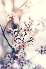 Mock Cherry (Brent Betz) Tags: pink flowers trees light red summer sky sun sunlight leaves cherry evening spring afternoon bright dusk blossoms buds highkey limbs blooms mockcherry