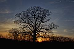 Gods Country (zarb67) Tags: sunset canon spring pennsylvania lonetree 2014 enonvalley 1dmkiv