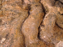 Asymmetrical ripple marks in quartzite (Baraboo Quartzite, upper Paleoproterozoic, ~1.7 Ga; southern shore of Devil's Lake, Devil's Lake State Park, Wisconsin, USA) 4 (James St. John) Tags: park lake wisconsin state ripple south devils marks ranges ripples range asymmetrical quartzite baraboo precambrian paleoproterozoic proterozoic
