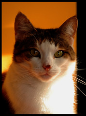 Jade (ag&ph2010) Tags: cats pets cat felines