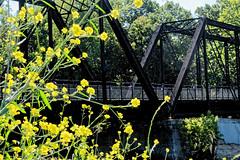 The Old Railroad Bridge (joeldinda) Tags: grandriver downtown park michigan ioniacounty portland tree wildflowers 2913 july railbridge bridge footbridge 1v2 nikon 2015 v2 nikon1v2