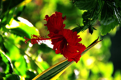 red flower (jimcooney84) Tags: red flower macro nature up canon mexico flora colours close bright bloom 60mm t3i holbox