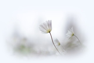 White Spring..