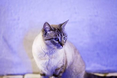 High Pressure Sodium CAT 1