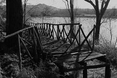 IMG_3164 (marcorapisarda_photos) Tags: gurrida ponte passerella lago abbandono