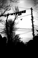 (nerapavlo) Tags: filmisnotdead lvivoverhead lviv плівка city lwow lemberg чб lvov чбфото leopolis ukraine львів україна bnw monochrom noir film filmphotography analog analogphotography 35mm 35mmfilm kodak project monochrome analogue kodakfilm urban bw sky lines