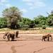 Samburu Kenya-279.jpg