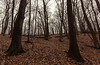 Campground Trail (Tony Webster) Tags: frontenac frontenacstatepark lakepepin minnesota mississippiriver earlyspring forest leaves spring statepark trees unitedstates us