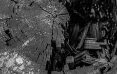 (C-47) Tags: wood timeeffect composition canon100mml28 noirblanc noiretblanc bw blackandwhite blackwhite black blanc bois shapes broken bokeh dof closeup
