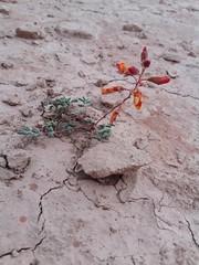 Vida en el desierto (Azaharito) Tags: chile valledelaluna