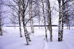 170318141939_A7 (photochoi) Tags: finland travel photochoi europe kemi sampo icebreaker