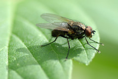 fly on a leaf (postbear) Tags: shadow hairy toronto green eye leaves fauna hair insect fly leaf spring wings eyes woods flora legs leg wing insects crack flies filth disease cocaine hairs donvalley inthewoods pestilence donriver robfordasshole destroycraigslist robfordisanasshole robfordandstephenharperaredisgustingbigots robfordisalyingsackofshit allconservativesarefilth likeallbulliesrobfordisachickenshitcoward robfordisafraidofeverything robfordisastupidbitch alongthedonriver thenewmapfunctionisterrible robfordhasneonazisforfriends robfordisacriminal foundoutreadingisdifficult robfordisadisgustingfuckingthief thenewuploaderisalsoterrible helpourformermayorisastupidclown formermayorrobfordlikescottaging richwhiteconservativesbuyjusticeyetagain robfordsexuallyassaultswomen call911theformermayorsacrackhead etobicokehead robfordusescrack robfordusescocaine robfordcaughtoncamerausingcrack robfordcaughtoncamerausingcocaine formermayorrobfordlikescocaine justsaynoyoustupidbagofshit foundoutcocaineiseasy