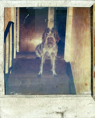 brandy (timp37) Tags: road dog pet animal polaroid tim illinois hunting ken 80s 70s brandy rd pinecrest bolingbrook putala