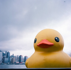 the duckie in Victoria Harbor (Gregory Wu) Tags: film ic kodak ikoflex hong kong rubberduck f35 75mm tessar