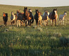 "The Gathering (gebodogs) Tags: horses flower spanish wyoming herd equine equus county"" moorcroft ""star spanishmustang oshoto mustangs"" ""crook uibreaslain danhaywardphotographyworkshop"