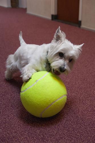 Spikey met de bal