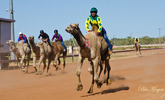 Boulia weekend (LeoBluMayer) Tags: australia camel outback races