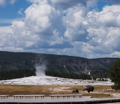 Sentinel (shonk) Tags: sky clouds buffalo oldfaithful yellowstonenationalpark geyser bison