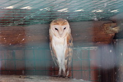 IMG_1575 (richard,s photography) Tags: bird animal zoo cyprus camel owl loin paphos pafos paphosbirdpark